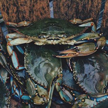 Life's Good Massaman Mud Crab